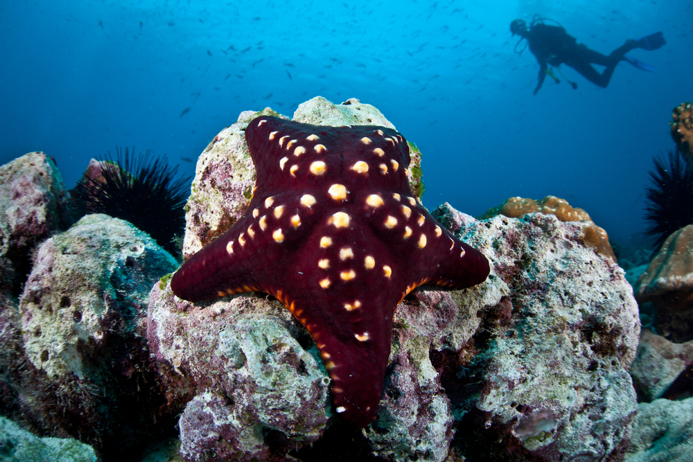 The Best Diving Spots in Costa Rica and How to Prepare