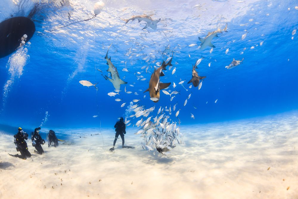 The Best Diving Spots In The Bahamas And How To Prepare