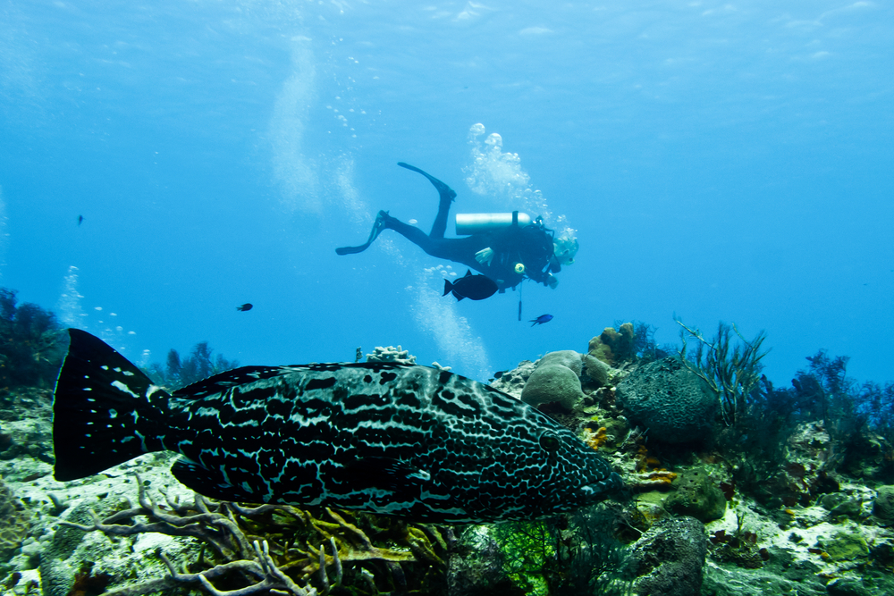 The best diving spots in Cozumel and how to prepare