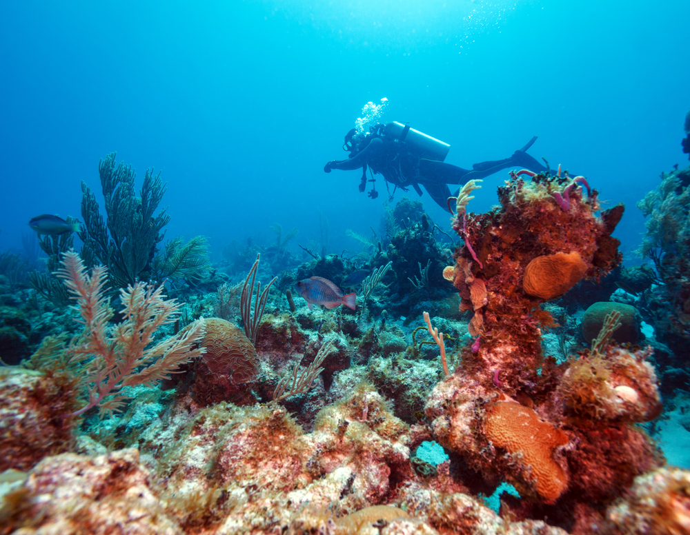 The best diving spots in cuba and how to prepare