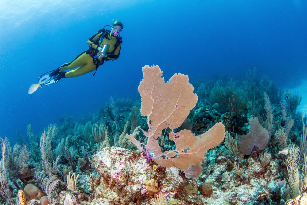 The best diving spots in Belize and how to prepare