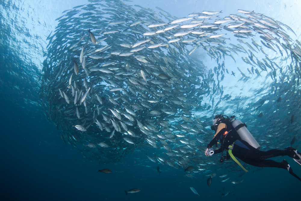 The Best Diving Spots In Bali And How To Prepare
