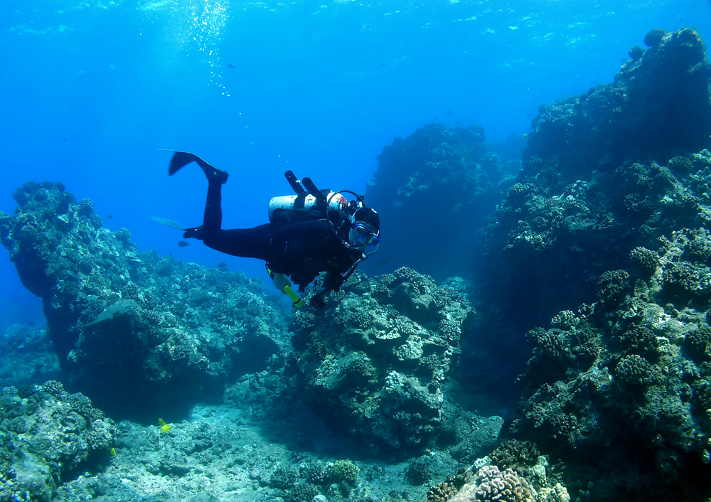 The Best Diving Spots In Maui And How To Prepare