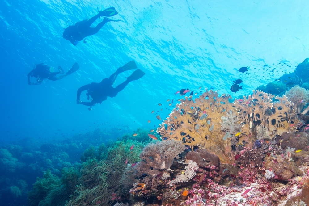 The Best Diving Spots In Philippines And How To Prepare